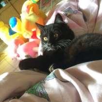 Отдам котёнка, в Челябинске