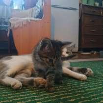 Котята, в Магнитогорске