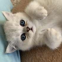Кошечка ищет новый дом, в г.Детмольд