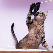 Полосатик кот Тишка в добрые руки, в Москве