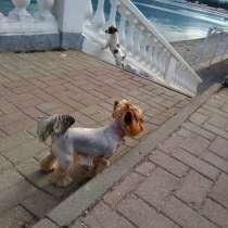 Передержка собак, в Геленджике