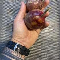 Купить Маракуйю, экзотические фрукты, в Владивостоке