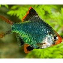 Рыбки и растения собственного выращивания, в Самаре