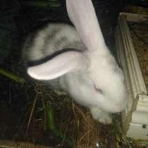 Кролики на мясо и живым весом, в Лыскове