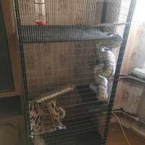 Клетка для грызунов, в Магнитогорске