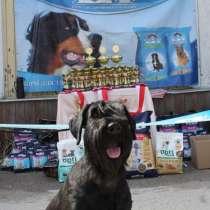 Всеукраинская выставка собак 2021, в г.Сумы