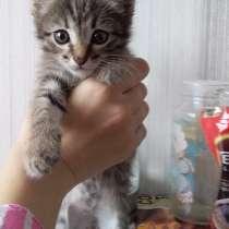 Отдам котят 1,5 месяца, в Орске