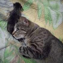 Кошка и катенок бесплатно, в Полевской