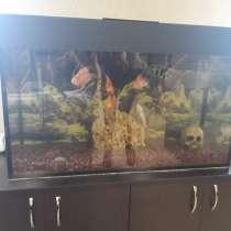 Чистка пресноводных аквариумов, в Ульяновске