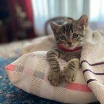 Котята в добрые руки, в г.Баку