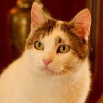 Иня – кошка сокровище в поиске дома и семьи, в Москве