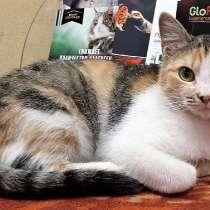 Кошечка- красавица хочет стать домашней, в Великом Новгороде