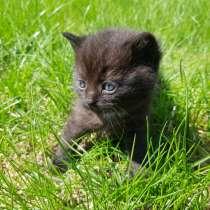 Котенок бесплатно, в Липецке