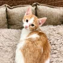 Рыжее яркое солнышко котенок Бантик ищет дом, в Москве