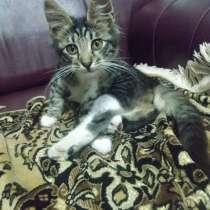 Котёнок Кузя ищет добрых хозяев, в Москве