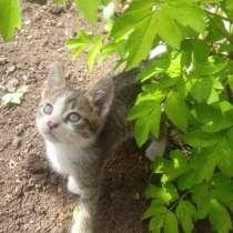 Отдам котенка в добрые руки (мальчик), в г.Мариуполь