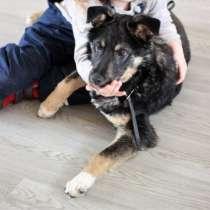 Буч - красивый и ласковый щенок даром из приюта, в Рязани