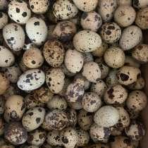 Перепелиные яйца (столовые), в Белгороде