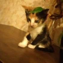 Котенок девочка ищет дом!!!, в Москве