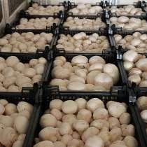 Продаем грибы оптом в Краснодаре, грибы оптом Краснодарский, в Краснодаре
