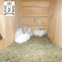 Кролики, мясо кролика, мех Рязань, в Рязани