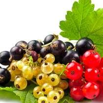 Плодовые саженцы от компании БИОНИЯ, в Пензе