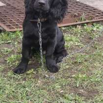 Собака, в Новом Ургале