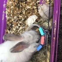 Продам кролик, в Томске