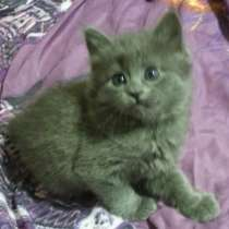 Возьму в дар красивого котенка за символическую плату :), в г.Тирасполь