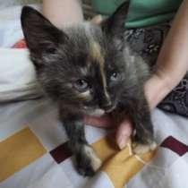 Отдам даром котята, в Екатеринбурге