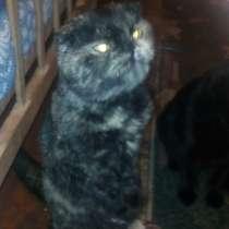 Продам котят, в г.Константиновка