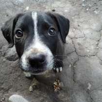 Собака чистокровный!!!, в г.Бишкек