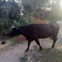 Продається дійна хороша корова, в г.Александрия