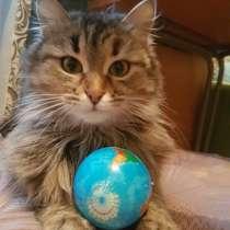 Кошечка Марта ищет дом, в Уфе