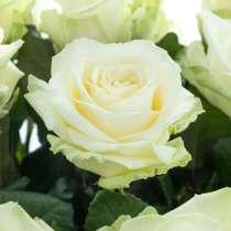Саженцы роз ОПТОМ, в Самаре