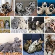 Питомник котят Улан Уде, в Улан-Удэ