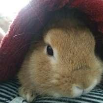 Отдам бесплатно Декаративный кролик, в Рязани