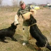 Дрессировка собак, в Тихорецке
