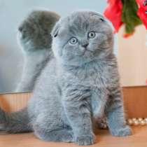 Котята, в Омске