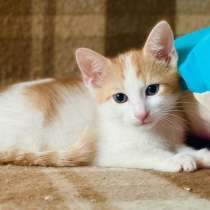 Рыженький котенок Огонёк- сплошное очарование, в Москве