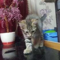 Котёнок мальчик нежный и ласковый, в Нижнем Тагиле