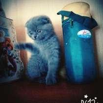 Котёнок мальчик, в г.Молодечно