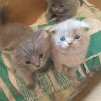 Продам котят, в Дедовске