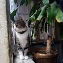 Нужна помощь в пристройстве кошки, в г.Баку
