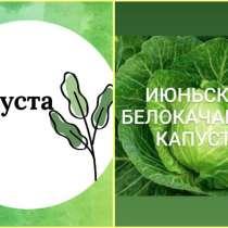 Продаём рассады овощей оптом и в розницу: капуста, перец, ба, в г.Бишкек