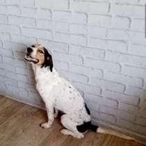 Умная и общительная собака ищет дом, в Астрахани