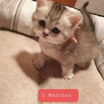 Verkaufe Kätzchen, в г.Oldenburg