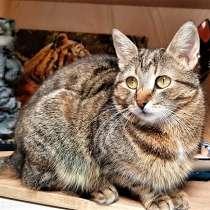 Нежная котодевочка очень хочет стать домашней, в Великом Новгороде