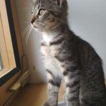 Отдам котенка в хорошие руки, в г.Прага