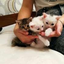 Котята, в г.Брест